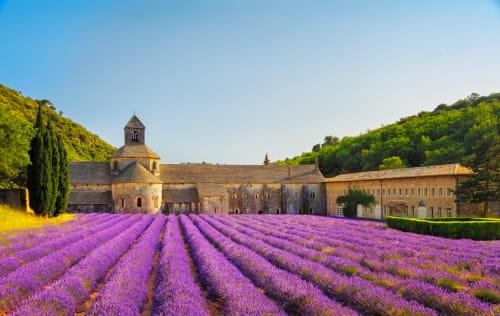 Visite des champs de lavande en Provence